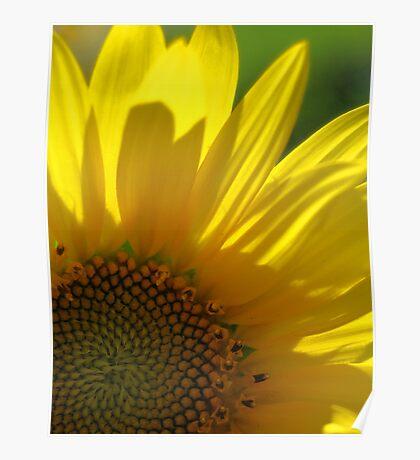 Sunflower Splash! Poster