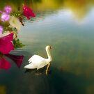 A Summer Dream by Brian Bo Mei