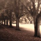Misty Morning Fade by Alan Watt
