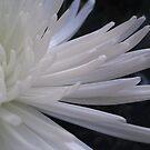 White Side by junebug076