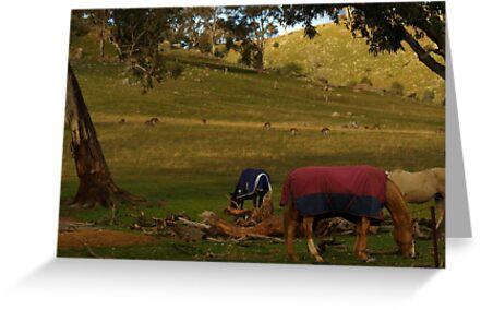 A Late Afternoon Rural Scape by shortshooter-Al