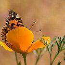 Versteckspiel Pretty Butterfly von CarolM