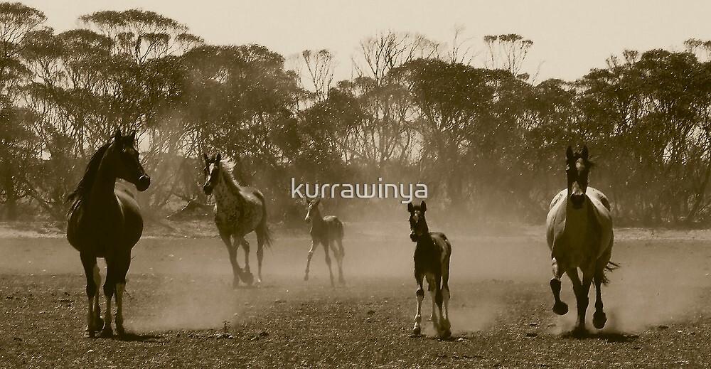 Herd of dust.. by Penny Kittel