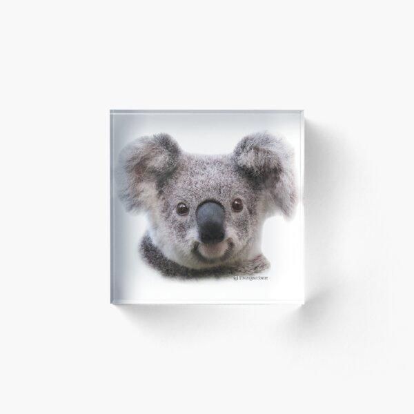 Krissy koala - wild and free Acrylic Block