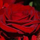 Rose by Kirsten Baiden-Amissah