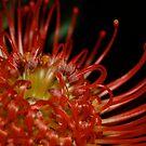 Red Flower by Kirsten Baiden-Amissah