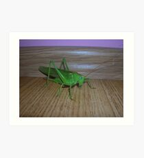 Skakavac (Orthoptera) Art Print