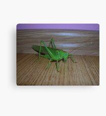 Skakavac (Orthoptera) Canvas Print