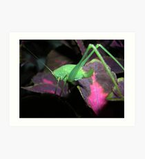 Baby orthoptera Art Print
