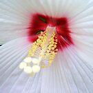 White Lace © by Dawn Becker