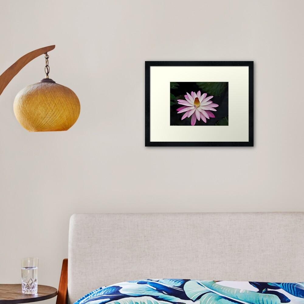 Ninfea Framed Art Print