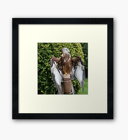 Black Kite, feeling the warmth on his feathers  Framed Print