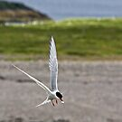 Catch of the Day by HelenBeresford