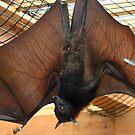Flying Fox Fruit Bat by Monnie Ryan