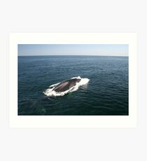 A Whale of  a Tale!  Part 3, Please read in order! Art Print