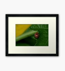 Insect 5 Framed Print