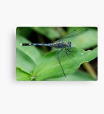 Insect 6 Canvas Print