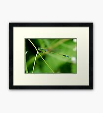 Insect 7 Framed Print