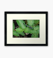 Insect Couple  Framed Print