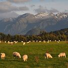Sheep Country by Peter Hammer