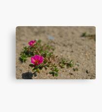 Pink Wildflowers in the Sand Leinwanddruck