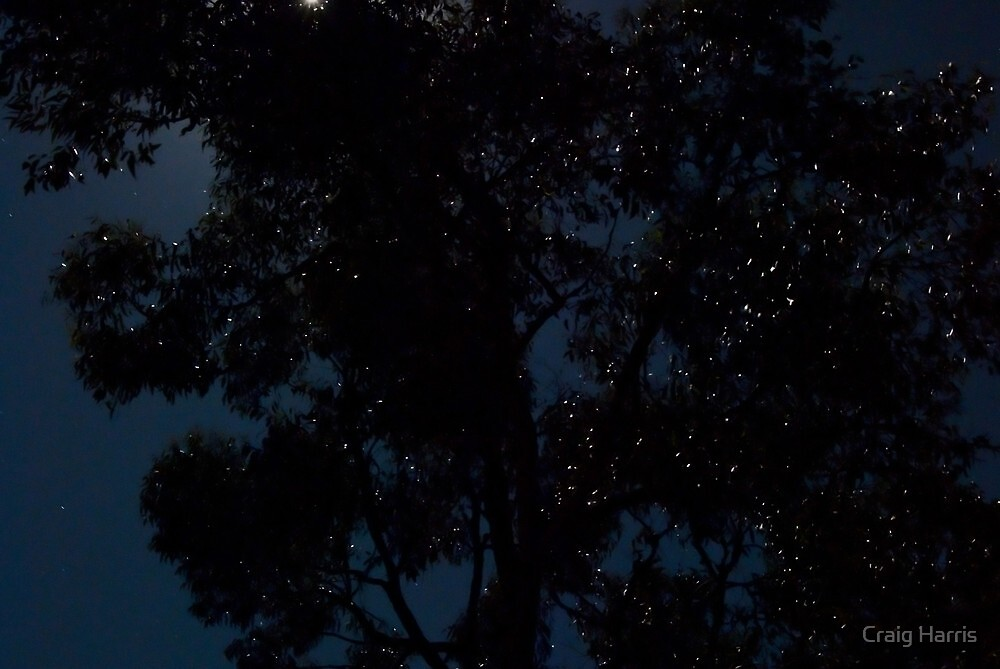 Fairy lights by Craig Harris