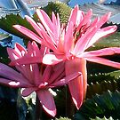 Waterlily by marinar