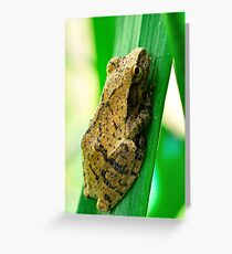 Small Grass Frog Greeting Card