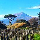 Vesuvius by dncnmckn