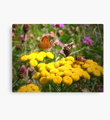 Butterfly and Fly Canvas Print