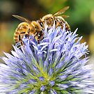 BEE TEAM by mc27