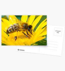 HONEY BEE Postcards