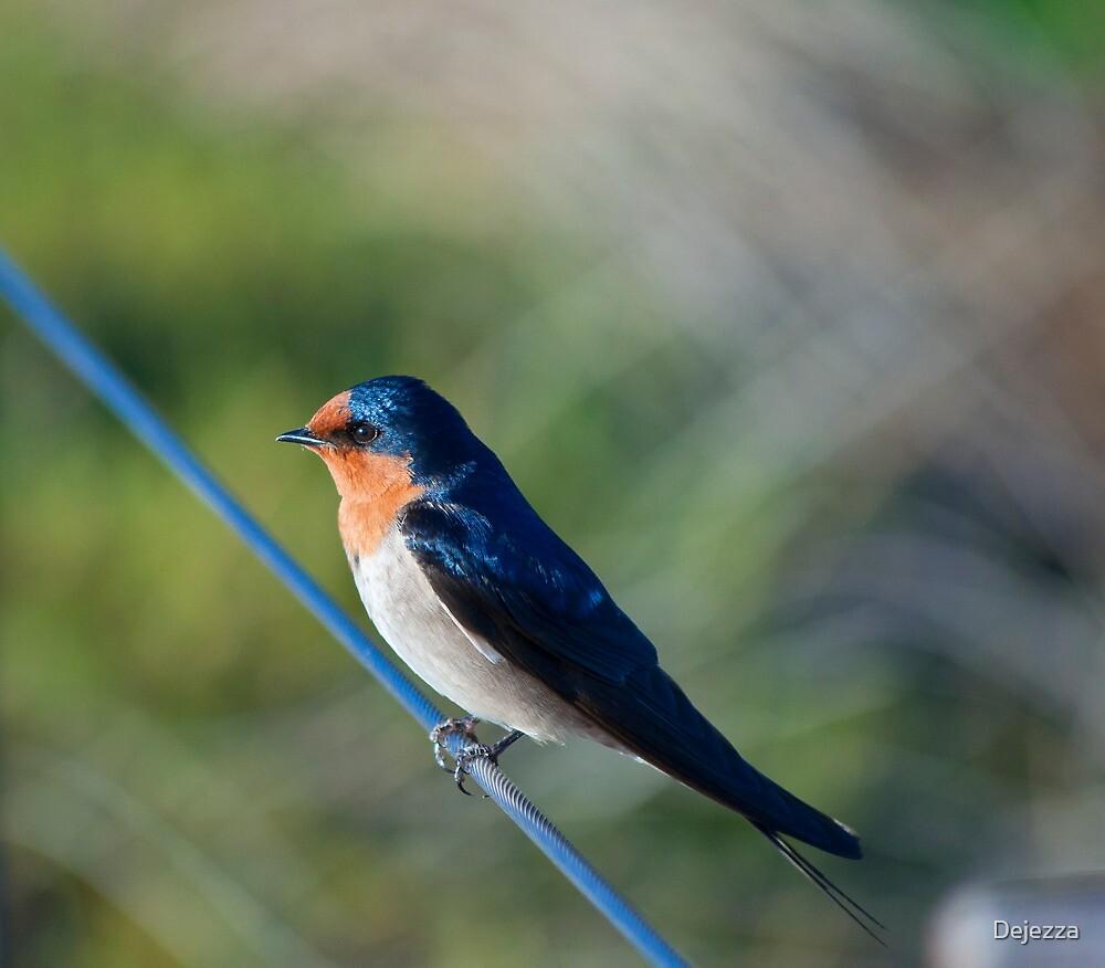 Swallow. by Dejezza