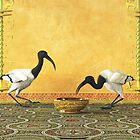 Two Ibis next to a frescoed wall by Roberta Angiolani
