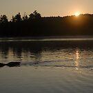 Common Loon calling the daybreak by JimSanders