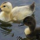 vice versa - opposite duckies! by monkeyferret