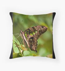 Tailed Jay Butterfly (Graphium Agamemnon) Throw Pillow