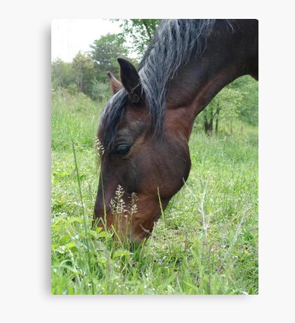 TOBY, THE RACKING HORSE Canvas Print