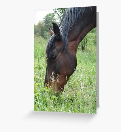 TOBY, THE RACKING HORSE Greeting Card