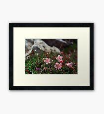 Zwerg Alpenrose Framed Print