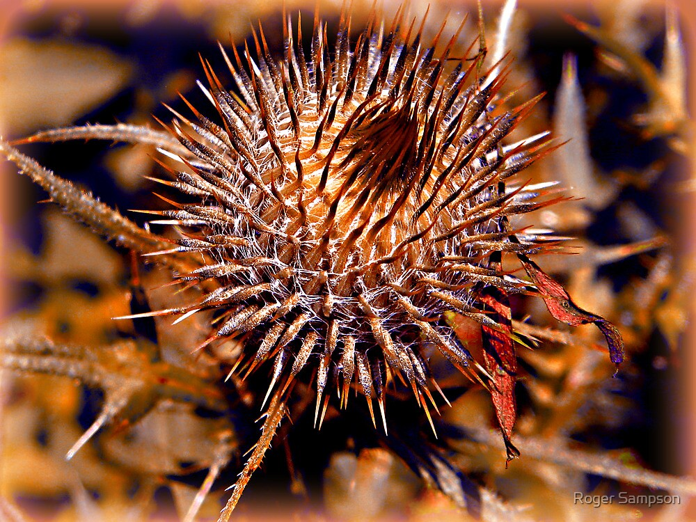 Thistle by Roger Sampson