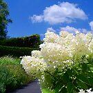Clouds of Hydrangea by Brian Gaynor