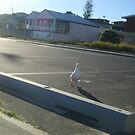 Seagull by KAHLIA