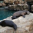 Just relaxing with a friend by Missy Yoder