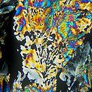 2010-2010-07--31-4752-2_RB by owensdp1277