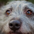 Pepper - The Eyes Have It by lisajns