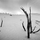 Dune 1 by Jeremy Watson