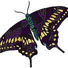 Black Butterfly by clovido