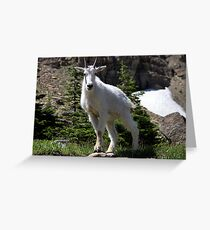 Goat stare Greeting Card