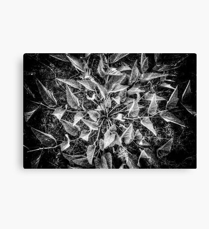 Leafplosion Canvas Print